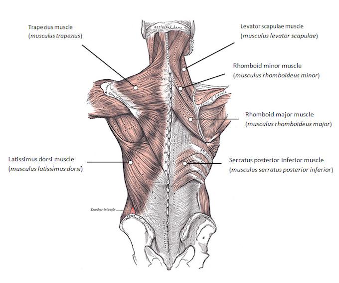 Rücken trainieren, aber richtig: Die Anleitung für einen brachialen ...